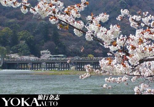 东湖的磨山景区樱花园